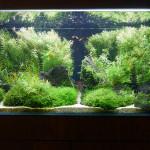 pic_nature_aquarium_im01