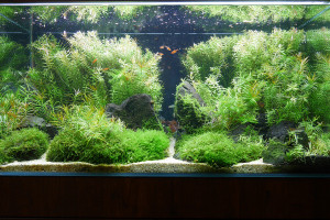 pic_nature_aquarium_im01